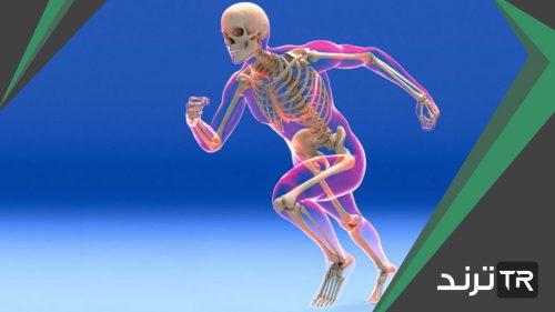 أين توجد المفاصل غير المتحركة في الإنسان