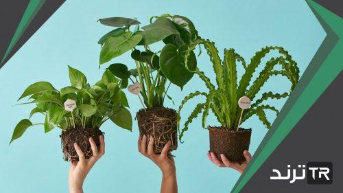 اكتب ثلاث خصائص مشتركة بين النباتات