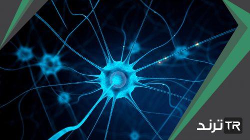 تؤدي الهرمونات إلى زيادة أو تقليل سرعة عمليات خلوية محددة