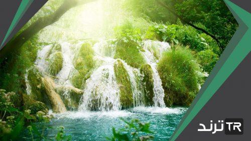 تتمثل الغابات الاستوائية في بعض مناطق العالم ومنها