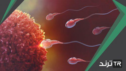 خلية ناتجة عن اندماج الحيوان المنوي مع البويضة يقصد به