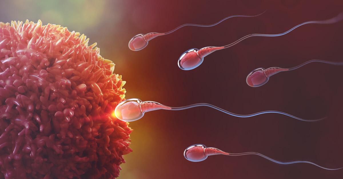 عمليه اندماج المشيج المذكر مع المشيج المؤنث داخل جسم الانثى