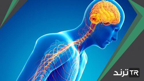 كيف ينتقل السيال العصبي عبر الشق التشابكي