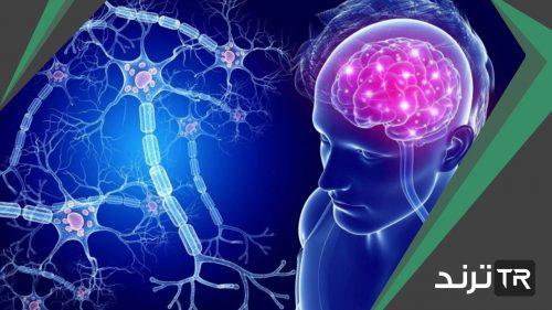 لماذا لا تنقسم الخلايا العصبية