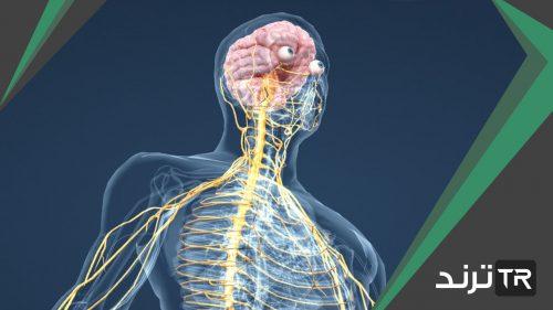 يتكون الجهاز العصبي من وحدات وظيفية أساسية هي العصبونات