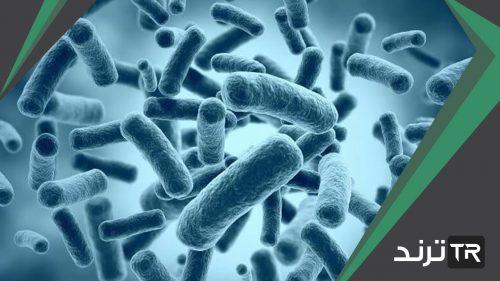 يوجد في امعاء المخلوقات الحيه ومنها الابقار انواع من البكتيريا تساعد على هضم الغذاء