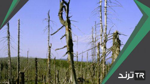 يزيد المطر الحمضي المواد المغذية في التربة