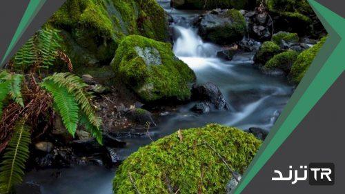التيارات المائية وجريان الماء السريع في الأنهار والجداول سبب قلة الأنواع الحية فيها