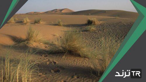 تزداد الكثافة السكانية في المناطق الصحراوية