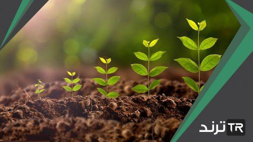تفيد عملية البناء الضوئي النبات في إنتاج