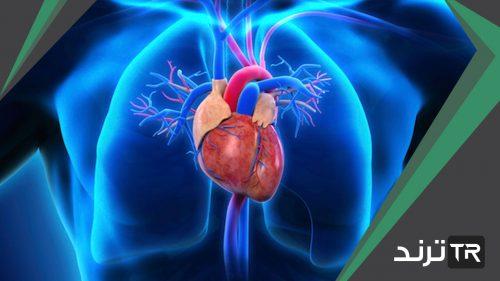 غدة من اهم الغدد الصماء في جسم الانسان ووظيفتها السيطرة على معظم النشاطات الحيوية في الجسم