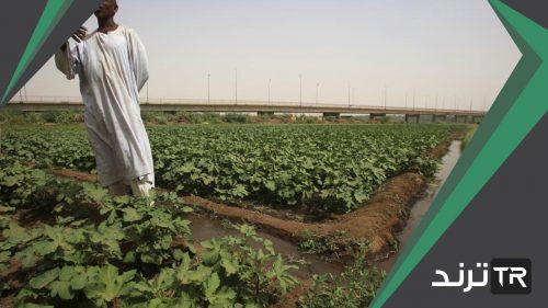 من أسباب انخفاض عدد العاملين في الزراعة