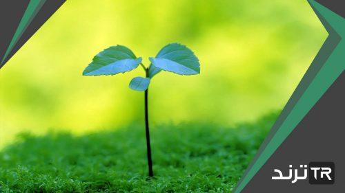 يتم في النبات عمليتي البناء الضوئي والتنفس وهما متعاكستان تقريبًا